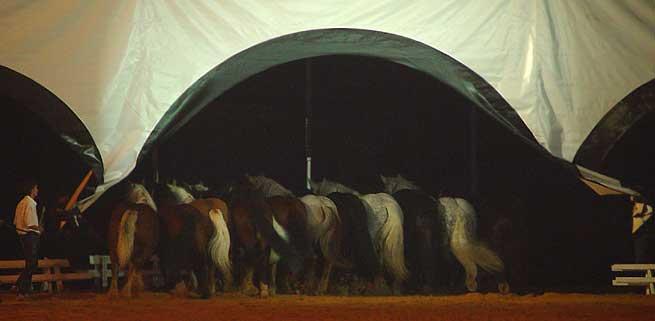 Montpellier gala 2002 - Salon du cheval montpellier ...