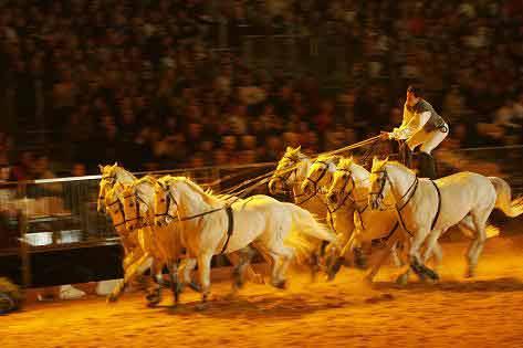figure carrousel equitation